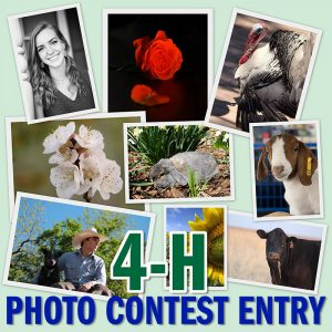 2021 Photo Contest 4-H Entry