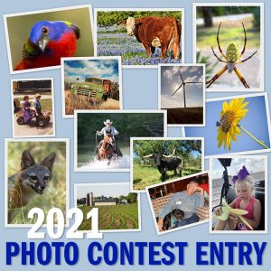2021 Photo Contest Entry